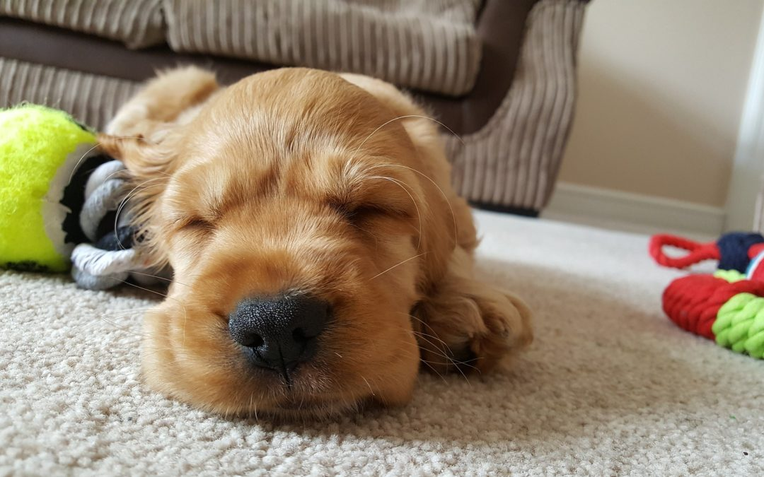 The Real World Sleep Guide